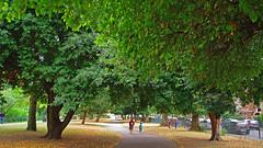 D15602.  Lloyd Park. (Ron Fisher) Tags: lloydpark walthamstow e17 london londone17 trees green path pentax pentaxkx tamron tamron18200mm tamronaf18200mmf3563xrdiiildasphericalif park