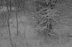 "IMG_20160914_232857 (""Jimmer"" ( http://jim-vance.pixels.com )) Tags: winter wintery snow"