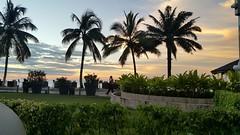 #palm #palmiye #palmcamayenne #guinnee #conakry #sunset #gununfotografi #gununfotosu  #gununkaresi #objektifimden (Tilkioglu) Tags: palm gununkaresi gununfotosu conakry objektifimden sunset palmcamayenne palmiye guinnee gununfotografi