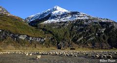 006x (Steve Daggar) Tags: wanaka newzealand mountains rur