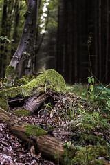 Baumstamm mit Vordergrund (stefanueberlein) Tags: natur landschaft landscape nature nikon baum baumstamm wood holz moos bltter grn morgen