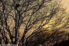 Behind Nature's Curtain! (sandy_photo) Tags: trees sunset india silhouette canon garden 1855 kolkata victoriamemorial sunsetandsunrise victoriamemorialhall eos1100d