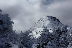 """The Manliest Chin"" (CoryHenchen) Tags: winter wild snow nature beautiful mt backcountry stowe vt mansfield"