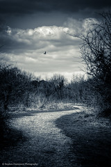 Follow The Bird Through The Winding Path (Stephen Champness) Tags: trees sky bw white black bird clouds vintage outdoors nikon path follow creepy adobe winding hdr helios lightroom nikond3200 vig photomatix vintagelens helios44m4 russianlens d3200 sovietlens stephenchampness