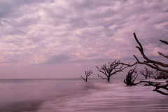 (Fred.Schneider) Tags: ocean longexposure water waves botanybay deadtrees charleston2013
