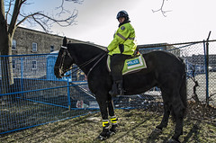 Engel and Winston (Ben Roffelsen) Tags: horse toronto liberty village police mounted rider winston officer equine unit blogto engle torontoist