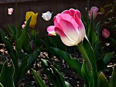 Spring ... (Ph0tomas) Tags: mygearandme photographyforrecreation