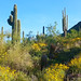 Sonoran High Desert