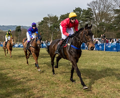Point to Point (artgriffo) Tags: horses jockeys bookies silks godstone pointopoint bookkepers