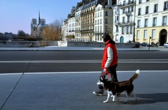 Paris : Pont de la Tournelle / Walking the dog (Pantchoa) Tags: dog paris france animal walking nikon cathedral snapshot notredame cathdrale streetphoto streetshot d90 lesaintlouis pontdelatournelle rememberthatmomentlevel1