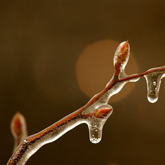 Ice Storm (Nancy A-T ~ a work in progress) Tags: storm ice nature weather frozen photo
