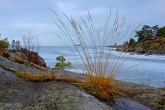 TML_2013-04-14_11-01-25 (Tor Langli) Tags: lake nature landscape fuji sweden sverige fotosafari vnern van