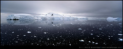 alight (David/.) Tags: film antarctica hasselbladxpan ektachromee100g wilhelminabay 30mmf56