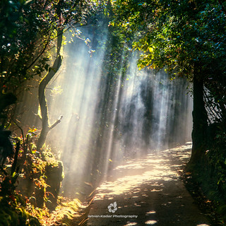 Escallonia Cloud Forest Trail