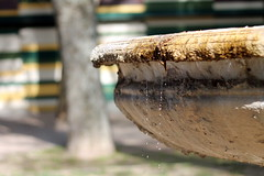 Wat (cobram88) Tags: rome roma tree water fountain drops drop albero acqua fontana gocce photographyforrecreation