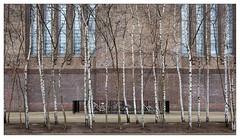 Realistic art (leo.roos) Tags: trees london facade zeiss tate modernart sony bikes tatemodern bicycles fietsen birches bankside londen gevel carlzeiss banksidepowerstation 5april nex berken april5 dyxum darosa leoroos nex5n czsonnare2418 londondyxummeet