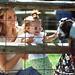 Overland Park Deanna Rose Farmstead