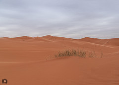 Natural Desert |   (Abdulrahman AlShetwi) Tags: cloud clouds desert dunes dust