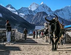 Nepal-98.jpg
