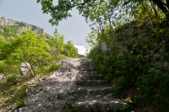 Climbing (TheSpaceWalker) Tags: wild italy mountain tree nature trekking spring nikon italia karst dolina trieste carso d300 valrosandra bagnoli carsismo sandorligodellavalle thespacewalker