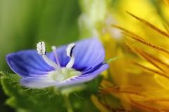 DPP_2257 (TBJordan1) Tags: flower macro nature beautiful photography amazing thomas tommy jordan reverse brokenland