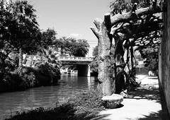 Faux Bois Trellis and Lexington Ave Bridge over San Antonio River, San Antonio, Texas 1306021609BW (Patrick Feller) Tags: county bridge blackandwhite bw white black monochrome river blackwhite san texas walk lexington trellis faux antonio avenue bois bexar pontist
