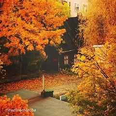 Przepiękna łódzka #jesień. #Łódź #Lodz #igerslodz... (Instagramers Lodz) Tags: autumn nature beautiful colours awesome lodz photooftheday picoftheday jesie limanowskiego instadaily uploaded:by=flickstagram igerspoland igerslodz instagram:photo=558365053637878555400261271