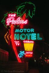 PalmsHotelNeon1MelissaDonaghue (daisyvisionxxx) Tags: sign night oregon portland lights monkey colorful neon nighttime palmtree portlandoregon vintagesign thepalmsmotorhotel