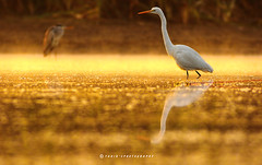 Sunrise this morning (T@hir'S Photography) Tags: egret great tree two park bird river animals everglades temperature colorado orange grass lake love wave family climate beach reflection color sunset outdoors scenics reed elegance golden sea silhouette wild florida marsh wildlife recovery coast usa neck national tropical white reserve sunrise sand gulf pond awe morning colored states standing gold heron blue texas dawn water nature heat animal landscape bokeh explore flickr