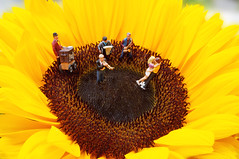 Tag 113 (Gitta Martin) Tags: miniaturen eisenbahnerfiguren tanz tanzen musik sonnenblume geld sommer 2016 sony alpha 57 sunflower blume flower blte natur nature dance klammerblues paar musiker band kapelle orchester helianthus annuus helios sunspot musikinstrumente leierkasten trompete hofiguren