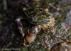 crabe (krakito1) Tags: bastion crabe menton mer