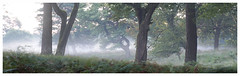 Forest in the morning (na_photographs) Tags: trees bume fog mist