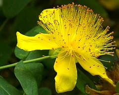 P1020136_edited-1 (ksztanko) Tags: flowers unitedkingdom england mawnansmith glendurgangarden