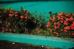 Entreato (xand_macedo) Tags: par xingu streetphotography