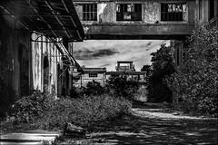 Reconqute par  la nature (vedebe) Tags: usine usinedsaffecte nature rue urbain city ville street fentre porte portes noiretblanc netb nb bw monochrome architecture