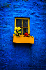 Yellow Window on the Blue Wall (Mark & Cy Photos) Tags: angle architectural architecture blue bunch color colour composition crafts detail element exterior family flowers format framing front general genre light lighting natural object orientation ornamentation outdoor photgraphy photo photography plant portrait rosaceae rose setting shade structure style travel urban vegetation vertical view wall window yellowartscraftsphotographysettingexterioroutdoorphotogenrestyletypeurbanphotgraphytravelgeneralorientationportraitlightingnaturallightframingcompositiondetailformatverticalangleviewfrontcolourcolorshadeyellowblueplantveg
