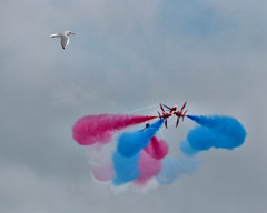 the perfect shot ruined by a photobombing seagull (Brian Wadie Photographer) Tags: 21816 extremestunt spitfiremk2 sunday beachassault blades mitchellbomber redarrowa redtigersfrefall sallyb typhoon