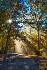 Here comes the sun. (Bernie Kasper) Tags: art berniekasper madisonindiana new old sunrise fall sun leaves vacation fog mist nikon nature naturephotography color colour cliftyfallsstatepark madison indiana clifty falls state park road light rays sunray tree trees sunburst