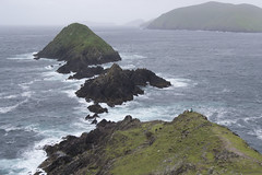 (IlPoliedrico) Tags: irlanda ireland green cost costa cliff scogliere nuvoloso cloudy ocean oceano verde field rain pioggia windy wind vento ventoso rock