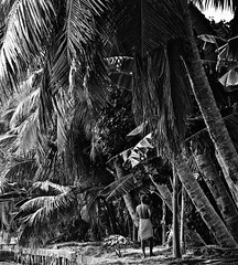 Light Wanders Through the Palms (The Spirit of the World) Tags: kerala india southernindia backwaters man local bw palms palmtrees light sunlight palmforest nature