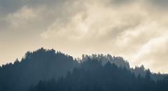 Leaving Humboldt (Ro-Ro-photo) Tags: forest silhouette humboldtcounty humboldt eureka arcata conifers redwoods