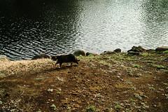 neko-neko1526 (kuro-gin) Tags: cat cats animal japan snap street straycat  sigma dp2