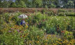 Kelmarsh Hall Artist (Darwinsgift) Tags: kelmarsh hall artist northamptonshire garden flowers walled hdr photomatix nikon d810 carl zeiss 35mm f2 distagon t zf 2 ii
