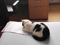 Pauli liest das Herbstcampus Programm (Huluvu424242) Tags: pauli herbstcampus programm