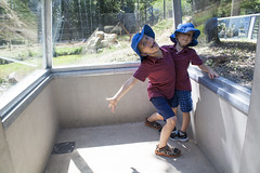 Julian & Theo in hyena tunnel (David_and_Marilyn_King) Tags: 2016 thoiry zoo park zoological animals african reserve france hyena tunnel glass