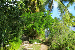 Key West (Florida) Trip 2015 7931Ri 4x6 (edgarandron - Busy!) Tags: florida keys floridakeys keywest higgsbeach keywestgardenclub