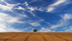Lonelyness (digital_underground) Tags: sonyalpha schleswigholstein deutschland landschaft landscape gold himmel clouds sky germany europe field wheat