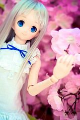 DSC01768 () Tags: dolls custom volks menma dollfiedream anohana meikohonma