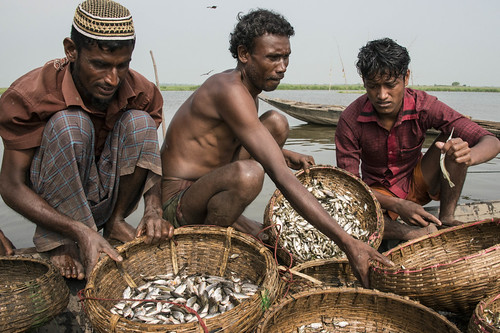 Fishermen in Sunamganj, Bangladesh. Photo by Finn Thilsted, 2013.