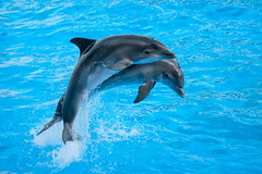 Duet (koalie) Tags: france water pool animal dolphin antibes marineland biot provencealpesctedazur